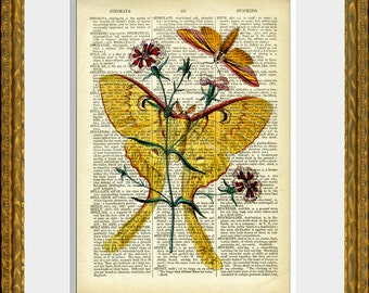LOVELY LUNA MOTH recycled book page art print - an upcycled 1800's dictionary page with an antique moth illustration - home decor