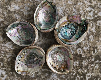 Abalone   for sale -