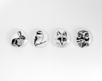NEW- Mini  Fauna Magnets - Set of 4 glass magnets - Made from reproductions of original drawings