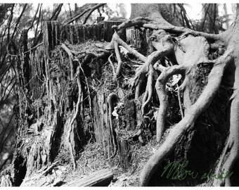 Root metropolis