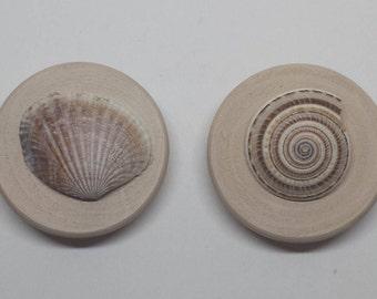 Set of Two Tan Seashell Magnets