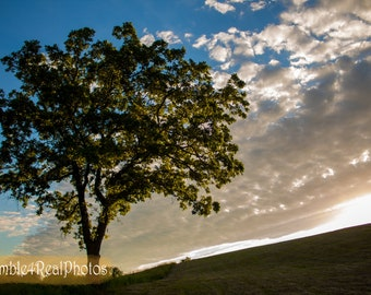 Horizon Photo - Tree on the Horizon - Landscape Photo, Horizon Skyline, living Room Decor, Nature Photography, Sunset Photo