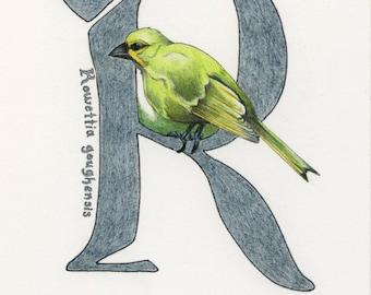 Avian Alphabet R