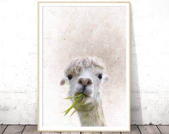 Alpaca Print, Nursery Decor, Nursery Animal Print, Nursery Printables, Nursery Prints, Nursery Wall Art, Printable Art, Trends, Large Art