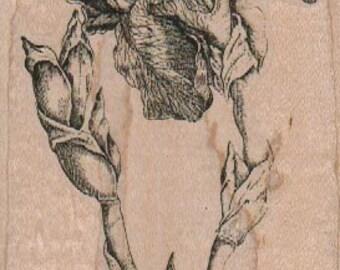 Botanical stamp Fris ChamairisLatifolia  wood mounted rubber stamp  18733