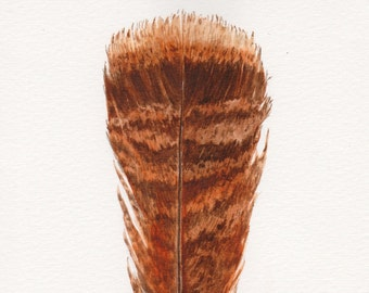 Feather Watercolor, Turkey Feather, Original Watercolor Painting, Wild Turkey Feather Painting