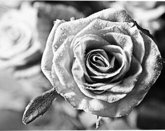 Canvas wall art flower Black white red rose Macro Romantic decor Fine art canvas Housewarming gift Hall decor print 8x12 12x18 16x24 24x36