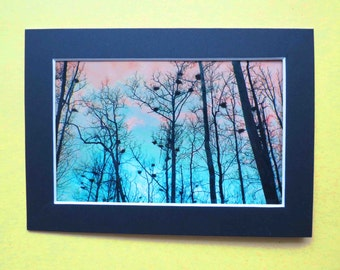 Matted 4x6 Heron Heights Fine Art Print Photography, Signed Artwork, Tree Wall Art Home Decor