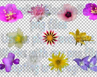 11 assorted photo flowers.Png files Copyright CfbPhotography-Caroline Blackwell