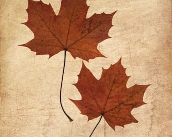 Two maple leaves, autumn leaves fine art photo print, foliage maple leaf, orange brown