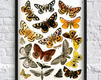 Butterfly print butterfly collection print butterfly gallery wall art decor botanical illustrations vintage art yellow brown Art-138
