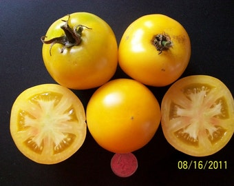 Heirloom Tomato- Taxi- 65 day Determinate- 25 seeds