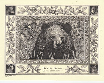 Black Bear- This 6-pack of blank, ivory notecards with matching envelopes feature a  pen-and-ink drawing by Linda DeVona of a Black Bear