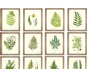 "Fern Print Set. ANY 12 fern prints. Foliage Wall Art Set. Set of 12 prints.  5x7"" 8x10"" 11x14"""
