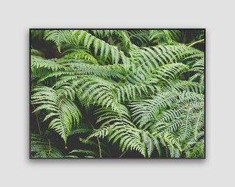 Fern Print- Digital Download, Botanical Print, Nature Photography, Nature Lover Gift, Scotland Photo, Scottish Highlands, Printable Wall Art