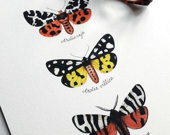 Butterflies print, painted butterflies, calligraphy, watercolor illustration, wall art print, fauna, entomology, handmade, photorealistic
