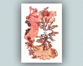 Seaweed art, pressed seaweeds, Original seaweed pressing, Victorian Marine Botanical Pressing, beach cottage decor, coastal living, seaweeds