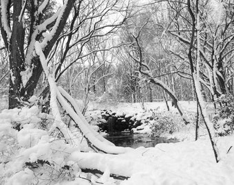 Winter Landscape Photograph - Snowy Winter - Winter Blizzard - Beautiful Nature Scene - Stormy Woods - Small Water Fall - Nature Photography