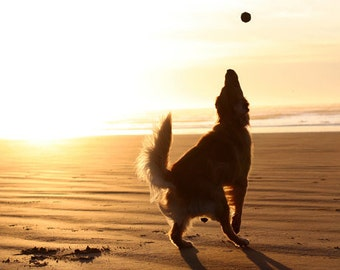 Sunset At The Beach, Golden Retriever Jumping Silhouette Photo, Blank Card