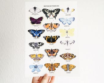 British Butterflies Print - A4 Print - Gouache Art Print - Butterfly Illustration - British Nature Print - Butterfly Print - Botanical Art