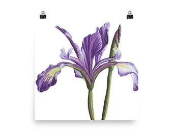 Purple Iris watercolor art print/Christmas gift/ home and living  wall decor floral painting/ realistic Iris art