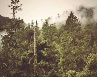 Foggy Mountain Forest Photo // Photo Art Print // mist, moss, oregon, fangorn, pacific northwest, columbia gorge, temperate rainforest