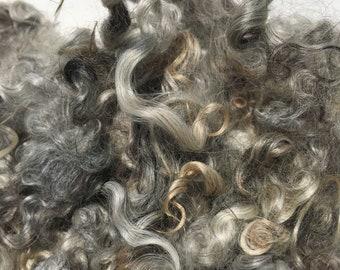 Gotland washed fleece / spinning fibre / grey fibre
