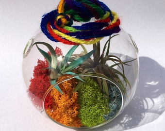 Air plant Rainbow orb with 2 in color plants