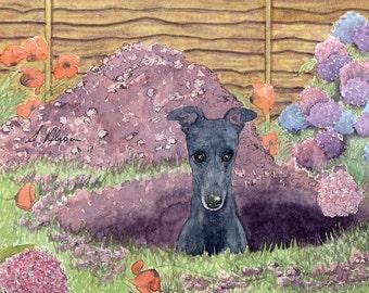 Gardening greyhound 8x10 art print - digging a hole modest about his achievements garden hydrangeas whippet lurcher sighthound