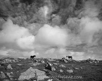 Black and white horse photo, horse wall art, horse photo, equine art, shetland pony photo, equine art, horse decor, horse art, equestrian