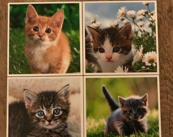Kitten Coaster Set