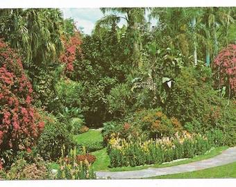 Vintage Florida Chrome Postcard St Petersburg Sunken Gardens Winding Path Flowers USED