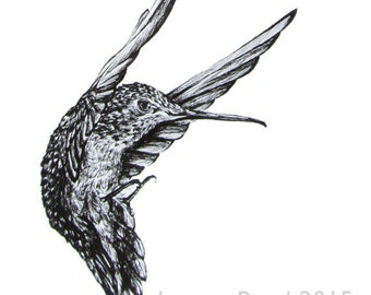 Heart Guardian - Hummingbird Ink Drawing - limited edition archival print