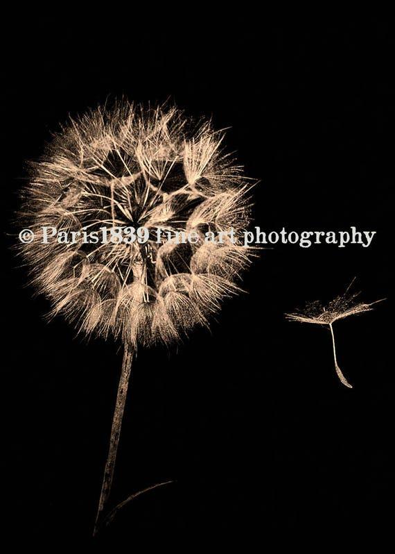 Dandelion Wall Art, Dandelion Seeds, Dandelion Instant Download, Dandelion Print, Digital Download, Dandelion Pictures, Fine Art Photography