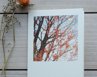 blank greeting cards, photo card, photography greeting card, fall card, fall foliage, greeting card