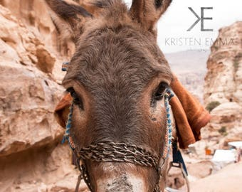 Donkey Friend | Petra, Jordan~ petra, donkey, mule, the siq, treasury, monastery, carved, ancient, jordan, middle east,