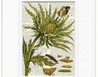 1600's botanical IV print