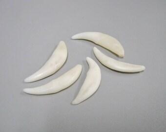 Coyote Teeth - SET of FIVE (5) (174-400)