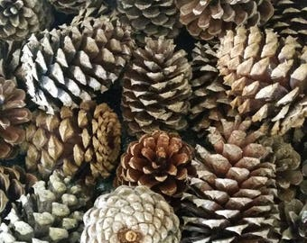Medium 2 to 3 Inch Pinecones / Bulk Pinecones / Woodland Theme /Bug-Free Pinecones /Pinecone Crafts / DIY Wedding / Fall Wreath Making