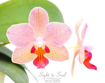 Orchid Art, flower photography, hot pink orchid photo, floral wall art, fine art print 5x7 8x10 11x14 botanical print