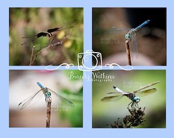 Whimsical decor, dragonfly photos, dragonfly print, dragonfly photography, nature photography, kids room decor, living room decor, country