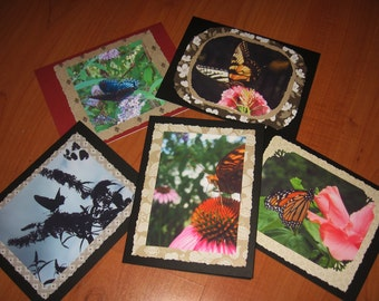 Butterfly Photo Card Set (5 cards)