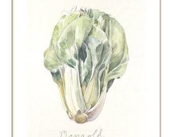 Green Chard PRINT - Vegetable watercolour drawing - Chard or Mangold watercolour pencil drawing - veggies still life art by Catalina