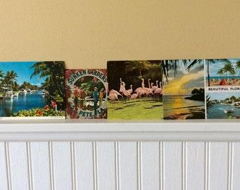 Vintage Florida Postcards, Set of 4, Flamingos, Palm Trees, Parrots, San Diego Zoo, Sunken Gardens, Coastal, Scrapbook, Memorabilia