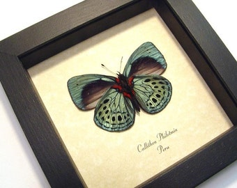 Dad's & Grad's Gift Real Butterfly Gifts Best Seller 14 Years 355V