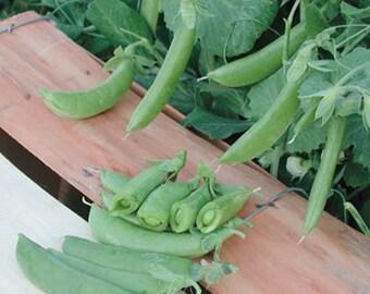 Cascadia Snap Pea Heirloom  Garden Seeds Non-GMO Early Heavy Yields Delicious Open Pollinated Gardening
