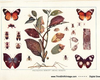 """Digital Download """"Protective Mimicry Among Insects"""" Illustration (c.1900s) - Instant Download of Insects, Butterflies, Moths"""