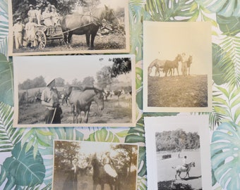 Lot of Vintage Horse Pictures   1940's - 1950's