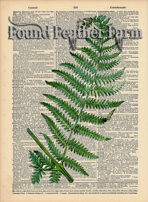 "Vintage Antique Dictionary Page with Antique Print ""Fern Leaf"""