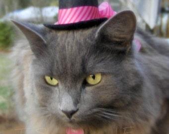 Chapeau - Mothers' Day Mini chapeau - la Saint-Valentin - Cupidon chat - chat rose